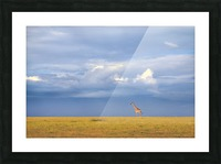 Colors of freedom Picture Frame print