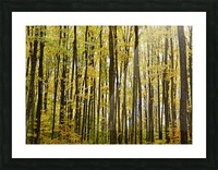 Smith Road Trees Picture Frame print