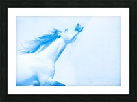 Blue Andalusian Horse 4 Picture Frame print