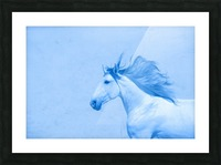 Blue Andalusian Horse 2 Picture Frame print