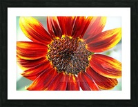 Autumn Sunflower Picture Frame print