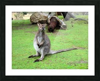 Animal16 Picture Frame print