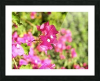Flower39 Picture Frame print