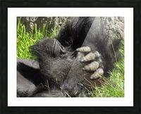Gorilla Headache Picture Frame print