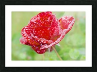Raindrops and Roses Picture Frame print
