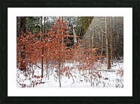 Fall Beech Trees Picture Frame print