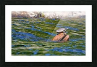 Map Turtle Picture Frame print