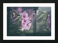 Bougainvillea Collage Picture Frame print