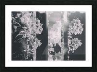 Bougainvillea Collage B&W Picture Frame print