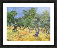 Olive Trees by Van Gogh Picture Frame print