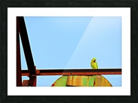 Bird 3 Picture Frame print