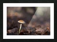 Mushrooms Picture Frame print