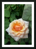 Pretty as a Rose Picture Frame print