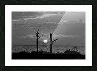BW Two Tree Sunset Picture Frame print