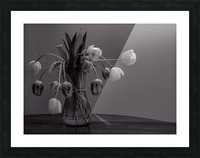 Tired tulips Picture Frame print