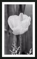 Country poppy Picture Frame print