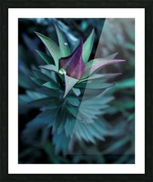 Funky flora Picture Frame print