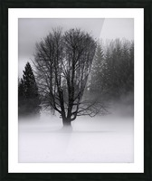 Winter fog Picture Frame print