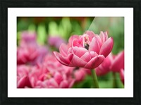 Plants - Flowers - 013 Picture Frame print