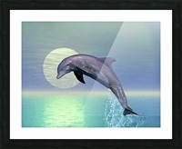 Dolphin Picture Frame print