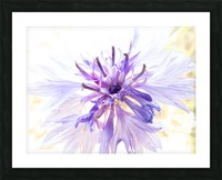 Purple Flower Burst Picture Frame print