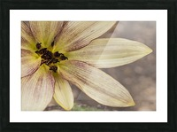 Yellow petals Picture Frame print