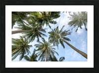 palm trees, sky, palms, background, summer, tropical, nature, holidays, travel, paradise, outdoors, Picture Frame print