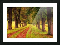 tree, avenue, nature, landscape, tree lined avenue, away, distance, trail, autumn, leaves, forest, green, mood, green leaves, lane, path, Picture Frame print