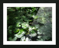 Lotus in the Sunlight Picture Frame print