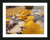 PA273015 Picture Frame print