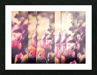 Lupine Fuchsia Collage Picture Frame print