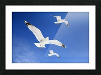 Seagulls Picture Frame print