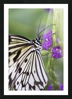 Paper Kite Butterfly Picture Frame print