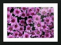 Purple flowre Picture Frame print