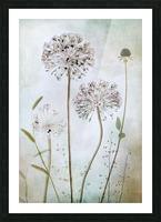 Allium Picture Frame print