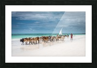 Masai cattle on Zanzibar beach Picture Frame print