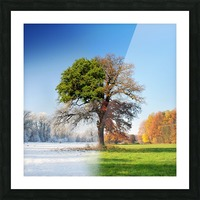 4 seasons Picture Frame print