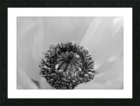 Poppy Whorl Black And White Picture Frame print