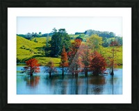 Water Trees Picture Frame print