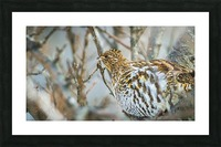 Ruffed Grouse Picture Frame print
