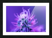FloweringPhase Picture Frame print