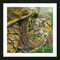 Box Turtle Picture Frame print
