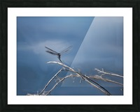 Dragonfly Digital Painting 52-70 200px Picture Frame print