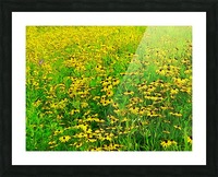 Field Of Flowers Picture Frame print