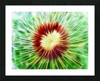 222808 dandelion Picture Frame print