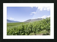 Okanagan Valley winery Picture Frame print