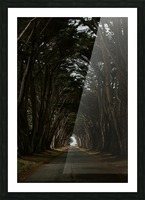Cypress Tree Tunnel California Impression et Cadre photo