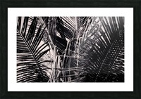 Palm Leaves Geometry Picture Frame print