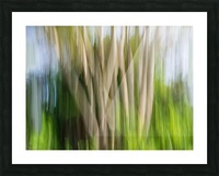 Moving Trees 30 Landcape 52 70 200px Picture Frame print