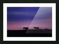 Zebra Sunrise Picture Frame print